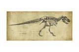 Tyrannosaurus Rex Study Reproduction d'art par Ethan Harper
