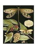 Curieuse libellule sur fond noir I Reproduction d'art par Vision Studio