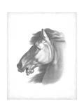 Equestrian Blueprint III