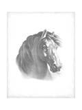 Equestrian Blueprint II