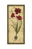 Amaryllis Panel I
