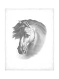 Equestrian Blueprint I