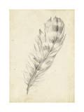 Feather Sketch II Reproduction d'art par Ethan Harper