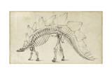 Dinosaur Study III Reproduction d'art par Ethan Harper