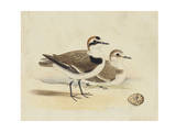 Meyer Shorebirds V