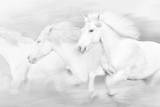 All the White Horses