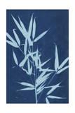 Cyanotype No2