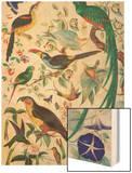 Exotic Parrots  c1850