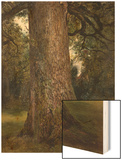 Study of the Trunk of an Elm Tree  circa 1821