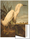 Snowy Heron or White Egret / Snowy Egret (Egretta Thula)  Plate CCKLII  from 'The Birds of America'