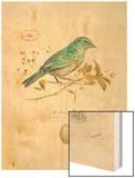 Gilded Songbird 1