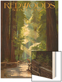 Redwoods State Park - Pathway in Trees