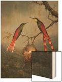Two Hummingbirds Guarding an Egg Nest