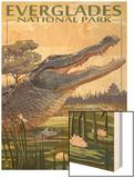The Everglades National Park  Florida - Alligator Scene