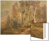 Autumn Birches in the Catskills