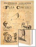 Broadsheet Advertising Professor Likonti's Romanian Flea Circus During Visit to London