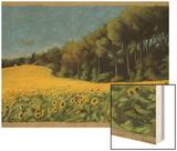 Sunflowers in Perugia