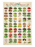 Herbs & Spices Reproduction d'art