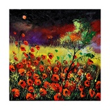 Poppies 7741