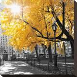 Park Pretty II