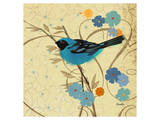Hooded Oriole Blue