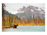 Natural Splendors Alaska IV