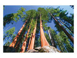 Sequoia National Park I