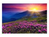 Rhododendron & Summer Mountain