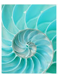Nautilus Shell II Reproduction d'art