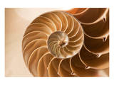 Fibonacci Pattern in a Shell Reproduction d'art