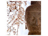 Buddha Face & Cherry Blossoms