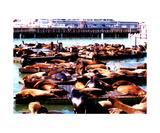 Seal Wharf