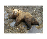 Grizzly Mud Bath