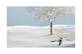 Snow That Lies Silent