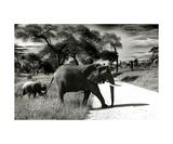 Elefant Momi