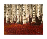 Red Carpeted Birch Forest