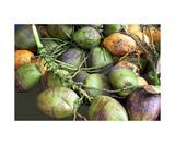 Coconuts in Mexico