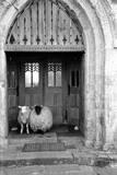 Church Sheep Papier Photo par Maurice Ambler