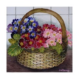 Red Mauve and Pink Primroses in a Basket  2012