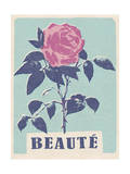 Beaute - Beautiful - Rose