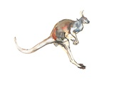Boing  (Red Kangaroo)  2012