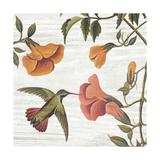 Vintage Hummingbird II
