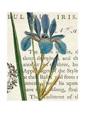 Iris Letter