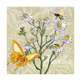 Sophisticated Elegant Herbs Spices Chamomile Daisy