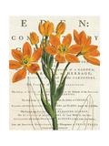 Euphorbia Botany
