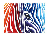 Abstract Pop Zebra