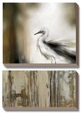 Sea Mist & the Egret