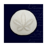 Nautical Blue Sand Dollar