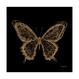 Aurelian Butterfly 2