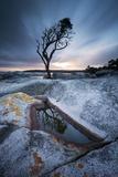 Tasmania  Australia Single Tree Reflected in Water Pool at Bay of Fires  at Sunrise